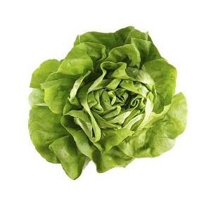 Насіння салату головчастого маслянистого