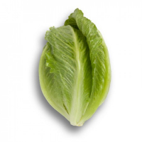 Насіння салату ромен Крунчита (Crunchita RZ)