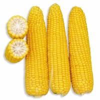 Насіння кукурудзи цукрової Добриня F1