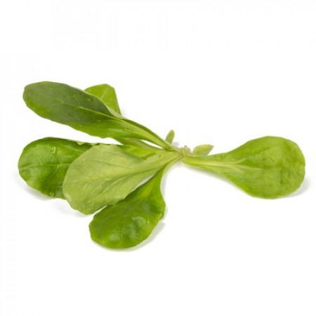 Насіння салату корн Діона (Dione RZ), зелений