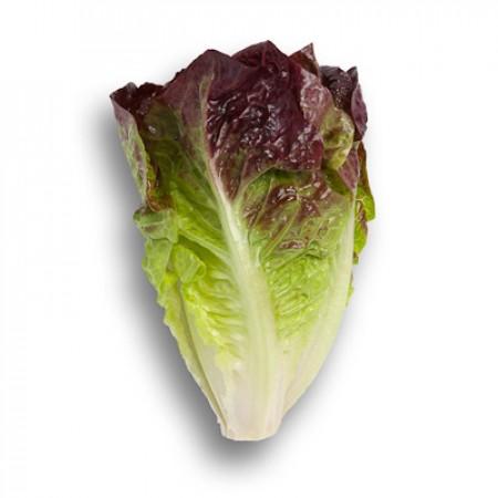 Насіння салату ромен Галатея (Galatea RZ)