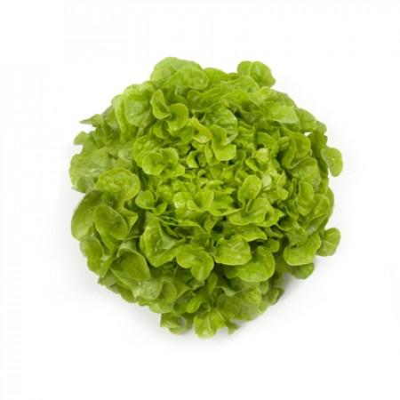 Насіння салату дуболисного Кірінія (Kirinia RZ), зелений