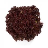 Насіння салату напівголовчастого Кармезі (Carmesi RZ)