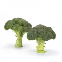 Насіння капусти броколі Реггі (Reggi RZ) F1 80-90 дн. (насіння каліброване)