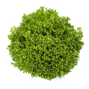 Насіння салату саланова Експедишн (Expidition RZ), зелений