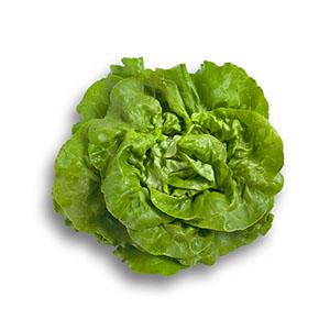 Насіння салату головчастого маслянистого Хунгаріна (Hungarina RZ), зелений