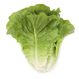 Насіння салату ромен Октавіус (Octavius RZ)