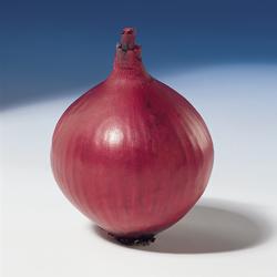 Насіння цибулі Ред Барон (Red Baron), 120-130 дн.