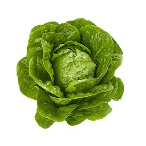Насіння салату ромен Квінтус (Quintus RZ)