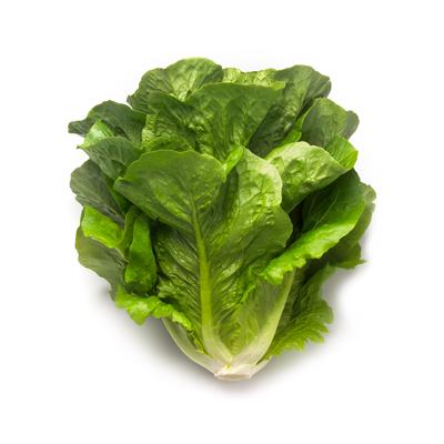 Насіння салату ромен Максімус (Maximus RZ)