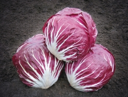 Насіння цикорію Індіго, салатний головчастий