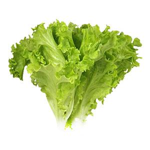 Насіння салату батавія Афіціон (Aficion RZ), 5 грам