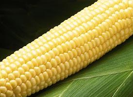 Насіння кукурудзи цукрової Бостон F1