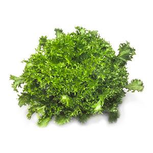 Насіння салату ендивій Сігал (Cigal RZ)