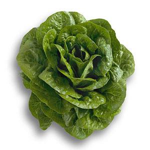 Насіння салату ромен Клаудіус (Claudius RZ)