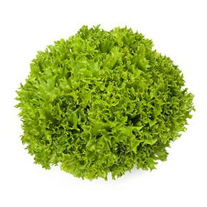 Насіння салату саланова Екзект (Exact RZ), зелений