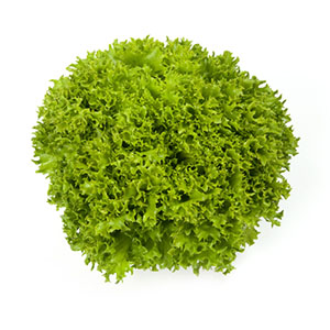 Насіння салату саланова Експлор (Explore RZ), зелений
