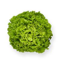 Насіння салату батавія Імеджінейшн (Imagination RZ)