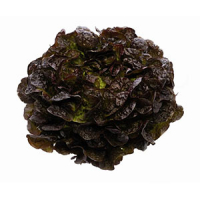 Насіння салату дуболисного Руксай (Rouxai RZ), червоний