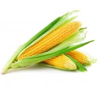 Насіння кукурудзи цукрової Солодка Мрія F1 (ранній 69–71 днів)