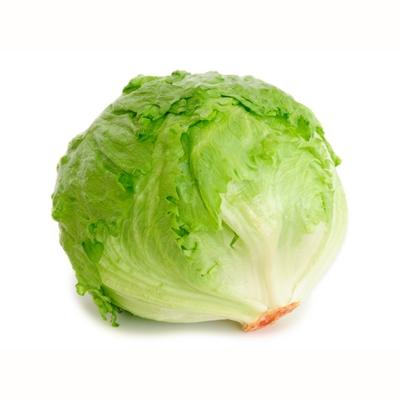 Насіння салату качанного Гондар (GONDAR)