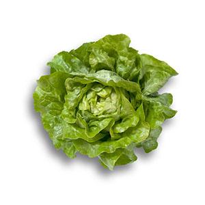 Насіння салату головчастого маслянистого Джиска (Jiska RZ), зелений
