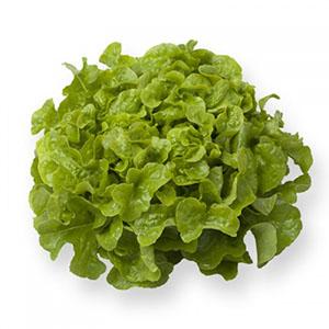 Насіння салату дуболисного Кітаре (Kitare RZ), зелений
