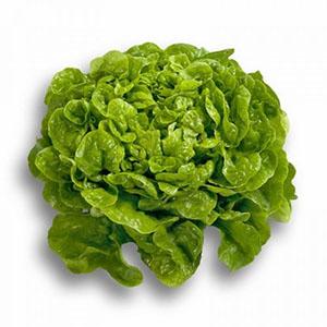 Насіння салату дуболисного Кітонія (Kitonia RZ), зелений
