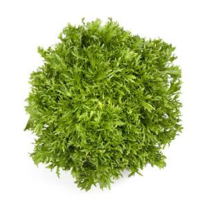 Насіння салату ендивій Корбі (Корбі RZ)
