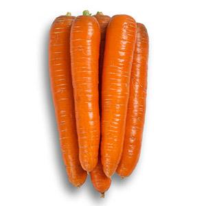 Насіння моркви Морелія (Morelia RZ) F1 Нантеc тип 120 дн.