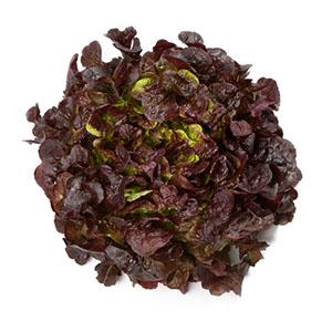 Насіння салату дуболисного Мурай (Murai RZ), червоний