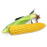 Насіння кукурудзи цукрової Старшайн F1