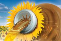 Насіння соняшника НК Бріо