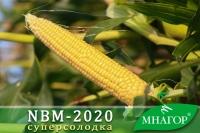 Насіння кукурудзи цукрової NBM-2020 F1 (ранній 73–75 днів)