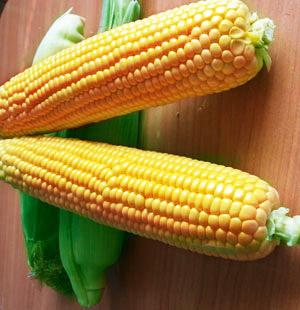 Насіння кукурудзи цукрової Оверленд F1
