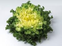 Насіння салату ендивій Домарі