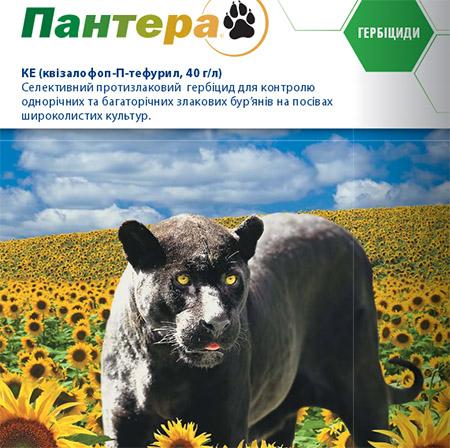 Пантера, к.е.